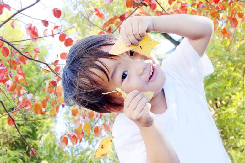 紅葉した落ち葉で遊ぶ男の子の写真